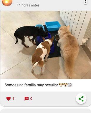 Muro Social Animals App - www.socialanimals.es